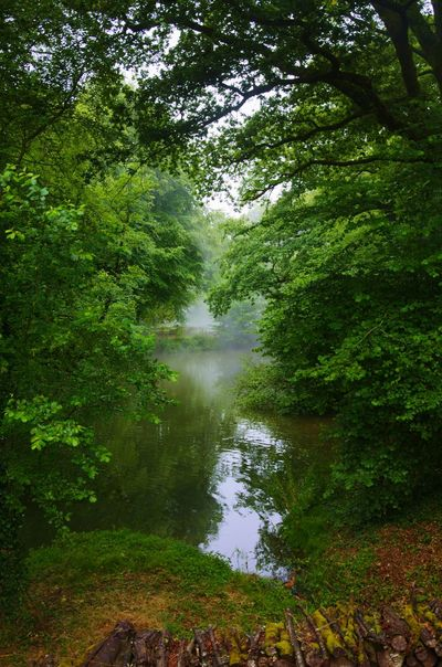 The forest in the fog Forest Fog Enjoying The View Beautiful Nature Landscape_photography Let's Do It Chic! Hanging Out My Secret Garden River Waterreflections