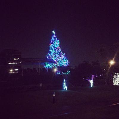 SanBorja se ilumina Navidadperuana Navidad Christmas city