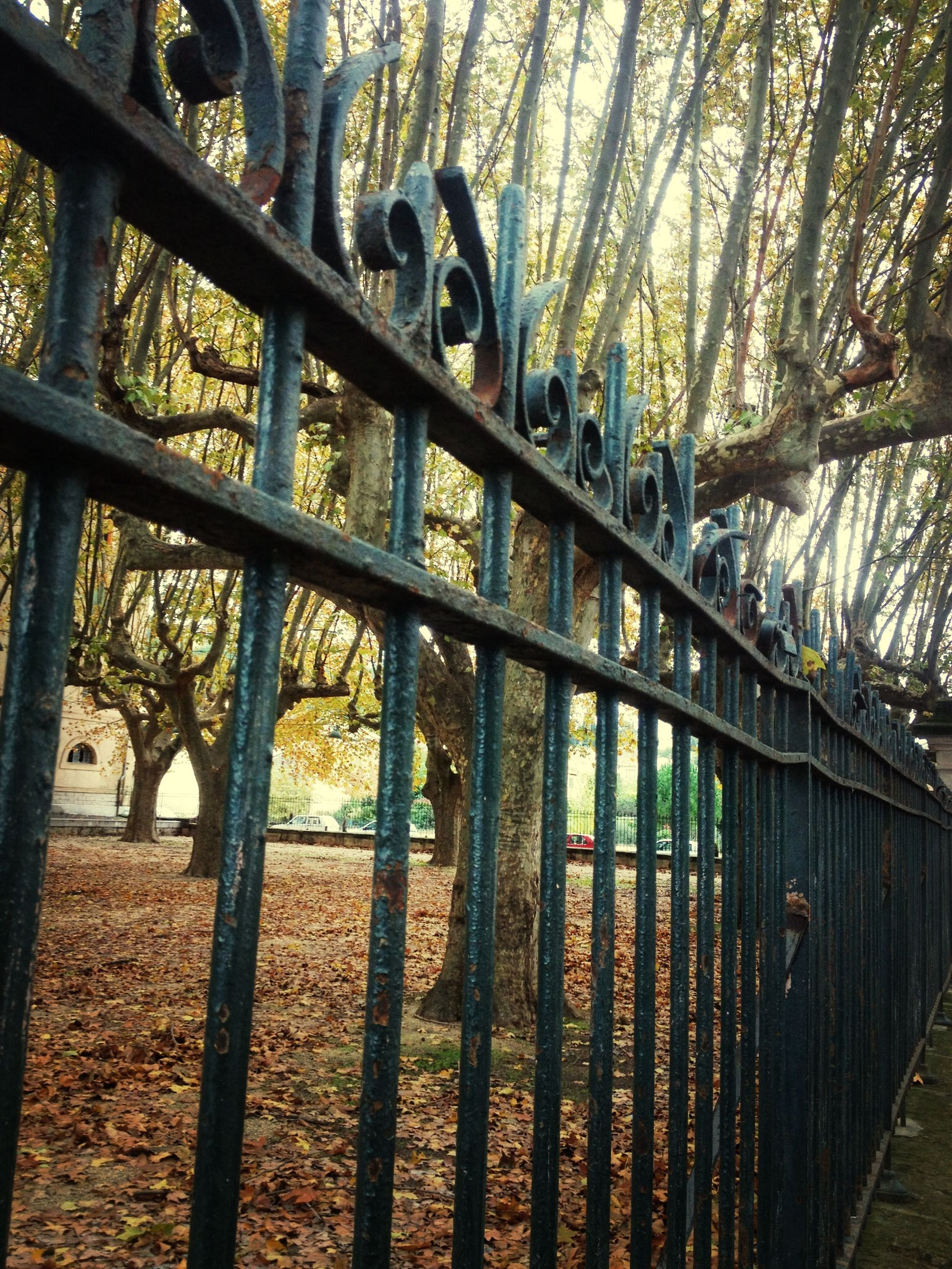 tree, metal, fence, railing, connection, metallic, bridge - man made structure, built structure, day, protection, safety, no people, tranquility, wood - material, outdoors, architecture, nature, sunlight, forest, security