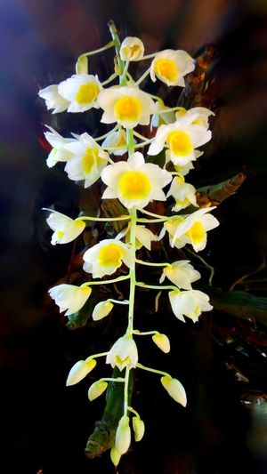 Plant Yellow Beauty In Nature Flowering Plant Petal Outdoors Nature Inflorescence Bouquet Blossoming  Season  Orchid White Color Texture Patterns In Nature Abstract Backgrounds Concept Wallpaper Backdrop Close Up Colorful EyeEm Nature Lover Wildlife & Nature Forest Focus On Foreground