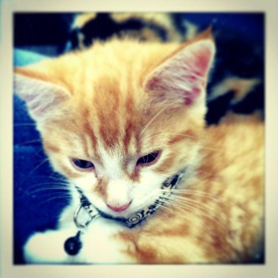 Deep in thought Kittenproblems Kittylife Mörk
