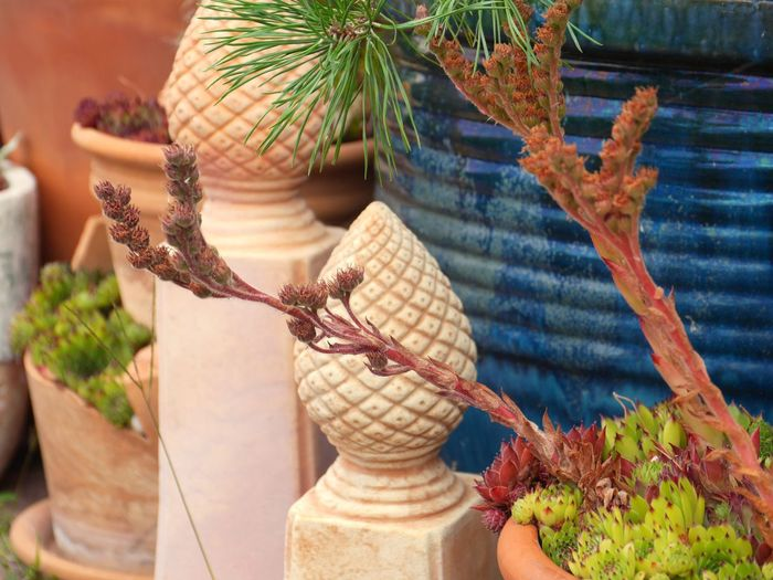 Plant by terracotta decoration in back yard