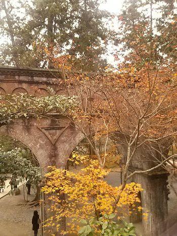 Autumn Colors 水路閣 南禅寺 Kyoto,japan Hugging A Tree Japan