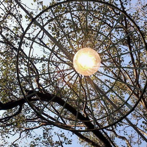 Electric_Lamp Electric_Bulb Tree Kala_ghoda Low_Angle Illuminated