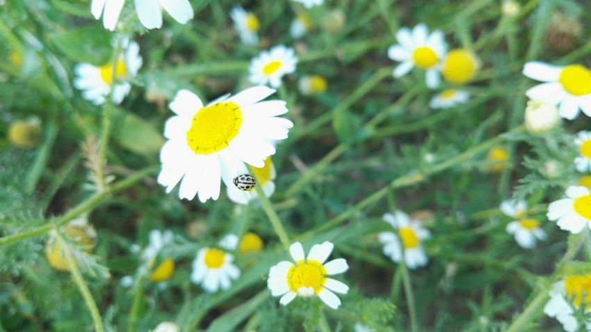 Mariquita♥ Summer ☀ Verano Flor