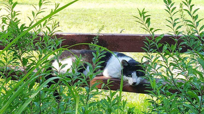 眠い 猫 発見 かくれんぼ ひなたぼっこ お昼寝 Japan Cat Nature Sleeping Hide And Seek Animal Themes Grass One Animal Animals In The Wild Day Nature Outdoors Green Color