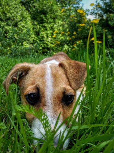 One Animal Dog Pets Animal Themes Green Color Grass Outdoors Nature Looking At Camera No People Reksio Mammal Close-up Domestic Animals Pet Portraits Pet Photography