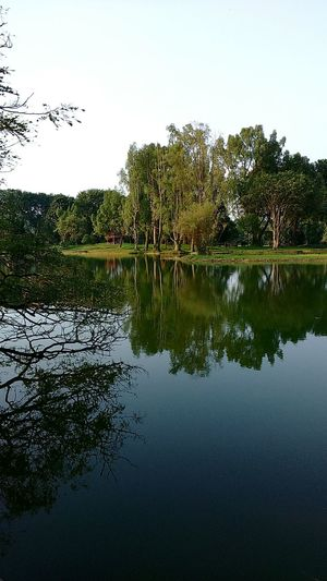 TaipingBandarWarisan Malaysian Nature Landscape Lakegardentaiping Sonyxperiac3 Hugging A Tree