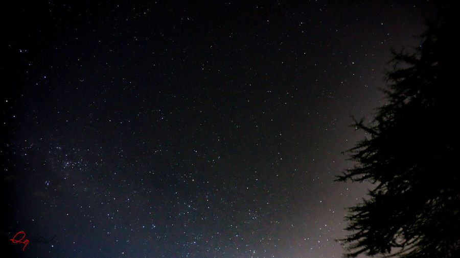 Astronomy Beauty In Nature Galaxy Infinity Low Angle View Nature Night No People Outdoors Plant Scenics - Nature Silhouette Sky Space Space And Astronomy Star Star - Space Star Field Tranquil Scene Tranquility Tree