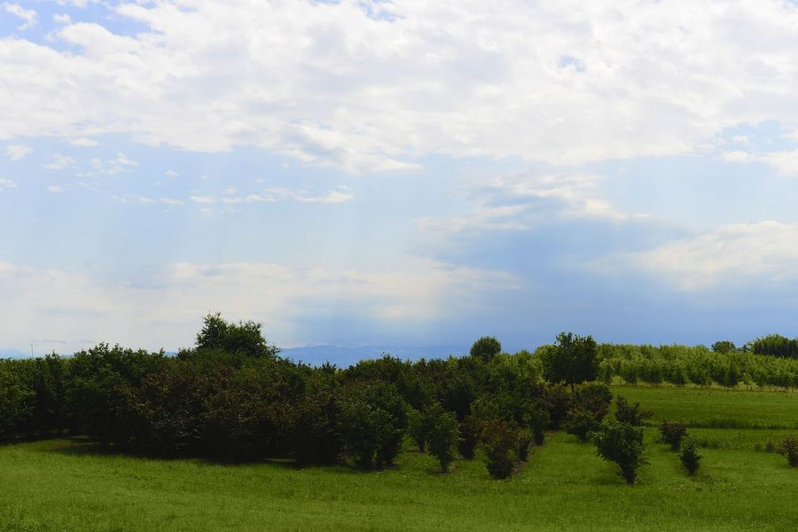 Surroundings of Sigmaringen Germany Sigmaringen Beauty In Nature Cloud - Sky Day Europe Field Germany Grass Green Color Landscape Nature No People Outdoors Scenics Sky Tranquil Scene Tranquility Tree