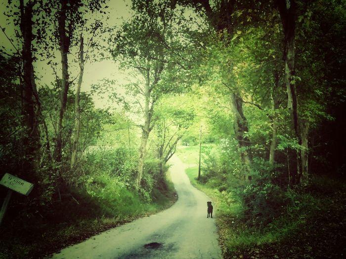 The Wanderer Time To Reflect Road Walking Beauty Pets Dog❤ Dog <3 Sairubers Nature Beautiful World
