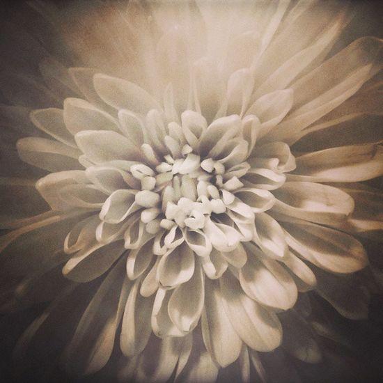 Flower Hoa