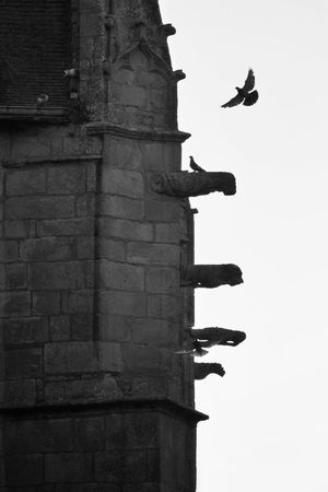 Animal Wing Architecture Bird Black & White Black And White Blackandwhite Blackandwhite Photography Bnw Bretagne Built Structure Bw Church Flying Gargouille Gargoyle Le Croisic Monochrome Outdoors Perching Pigeon Religion Sculpture Statue