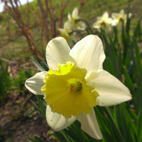 Spring blooms!!