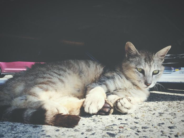 This Morning. Goodmorning Streetphotography Streetphoto_color EyeEm Best Shots Simple Photography Cat !!!