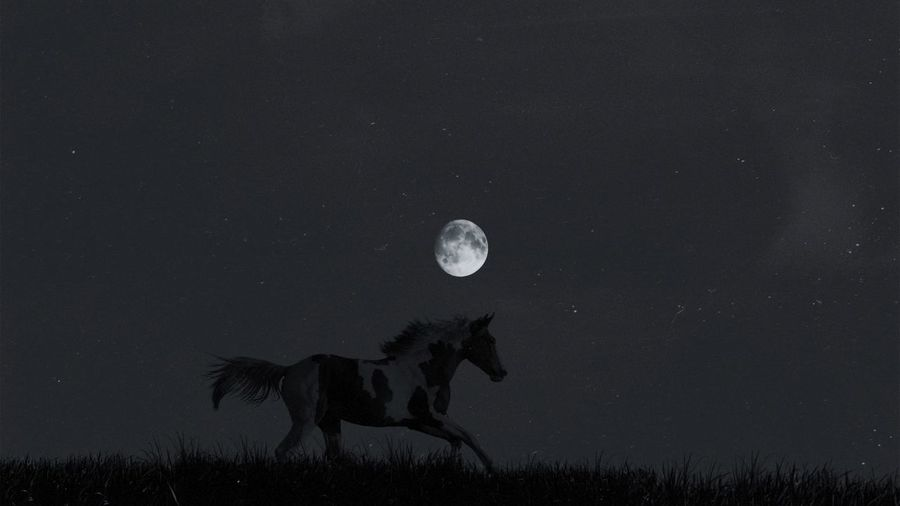 Wild horse and moon Minimal Minimalism Animals Blackandwhite In The Wild Black And White Black & White Black And White Light EyeEm EyeEm Vision Nikonphotography Moon Space Astronomy Full Moon Sky Capture Tomorrow Animal Nature Science Animal Themes No People Space And Astronomy Animal Wildlife Beauty In Nature Dark Scenics - Nature Planetary Moon Analogue Sound