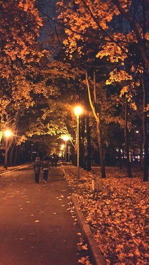 Nature Night People
