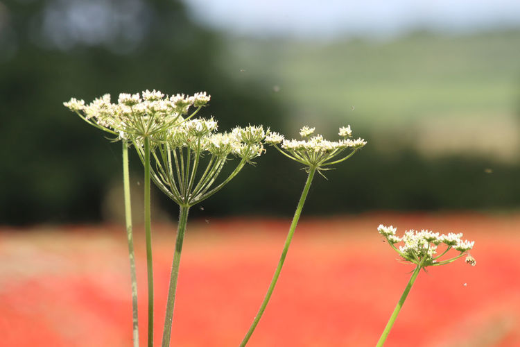 Close-up of flowering plant on field