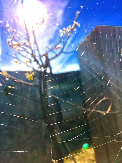 Sunshine webb Iphonephotography Iphoneonly Alaskan Nature Willow Spider Web Sunlight Spider Sky Close-up Web Insect A New Beginning