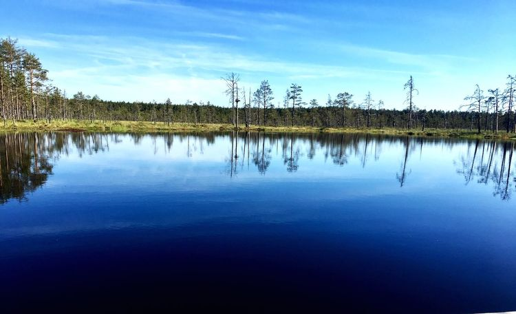 Visitestonia EyeEmNewHere EyeEm Best Shots Travel Destinations Bog Water Reflection Lake Sky Tranquility Tree Nature Reflection Lake