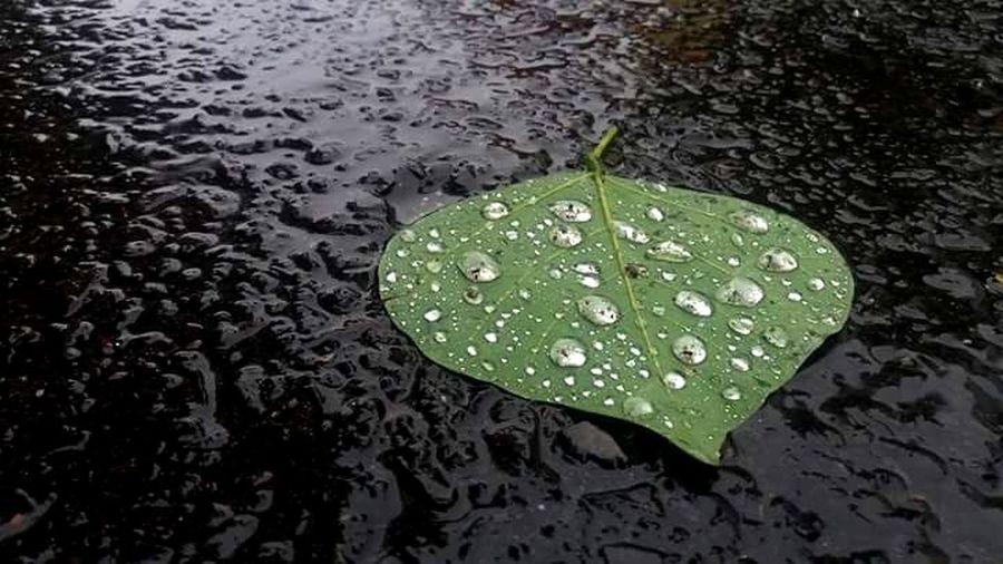 L'eau du Ciel. Dans La Rue Lluvia En La Ciudad L'eau De La Pluie Del Suelo Al Cielo. Dalilass Water Leaf RainDrop Wet Drop High Angle View Floating On Water Weather Rainy Season