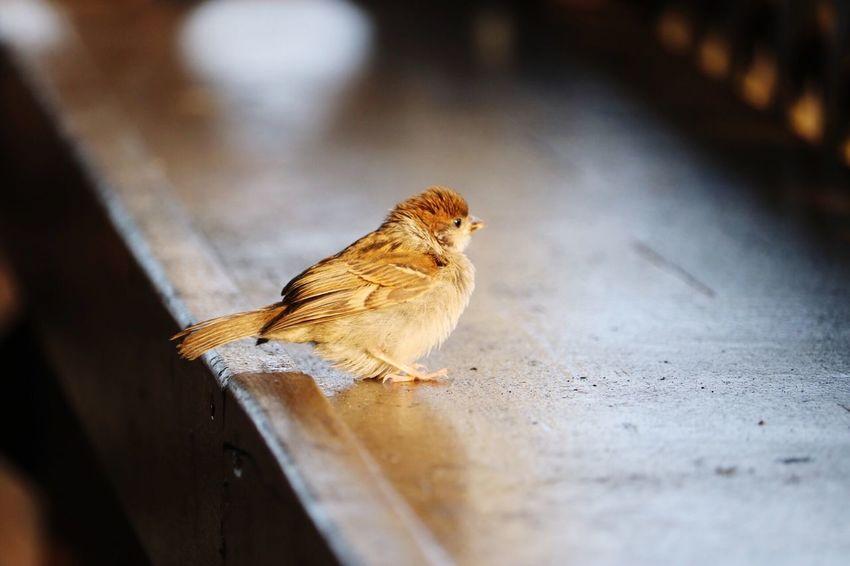 Japan Feelsogood Sea Bird First Eyeem Photo