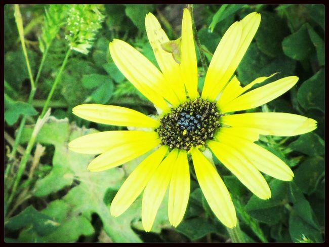 The Flower.. The Flower EyeEm Flower Flowerpower Taking Photos