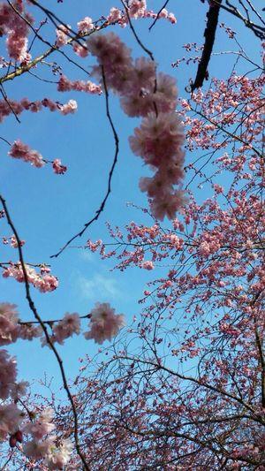 Fiore🌼🌻🌺 Tree Arvores Florindas Bello Fiore