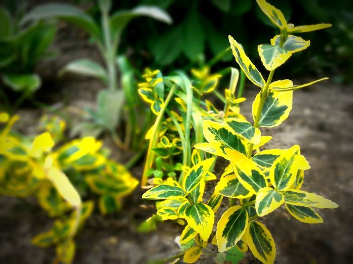 Growth Leaf Plant Close-up Yellow Focus On Foreground Freshness Nature Green Color Beauty In Nature Flower Selective Focus Fragility Springtime Growing Botany Branch Green Day Vibrant Color