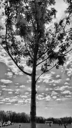 Tree at local soccer field... Taking Photos Hello World Hanging Out Relaxing Enjoying Life Instapic Kansasphotos Kansasphotographer Wow_america_hdr Ks_pride Sunrise_sunsets_aroundworld Wow_america_landscape Taking Photos Nature Colorfulleaves Atchisonks Sundown Kansasmag Kansasoutdoors Wow_bnw Kansasnature Wow_america_americana