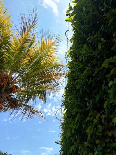 city walking EyeEmNewHere EyeEm Nature Lover Tree Palm Tree Branch Sky Cloud - Sky Close-up Palm Leaf Growing Date Palm Tree Stalk Tropical Tree Plant Life Treetop Date Tree Area