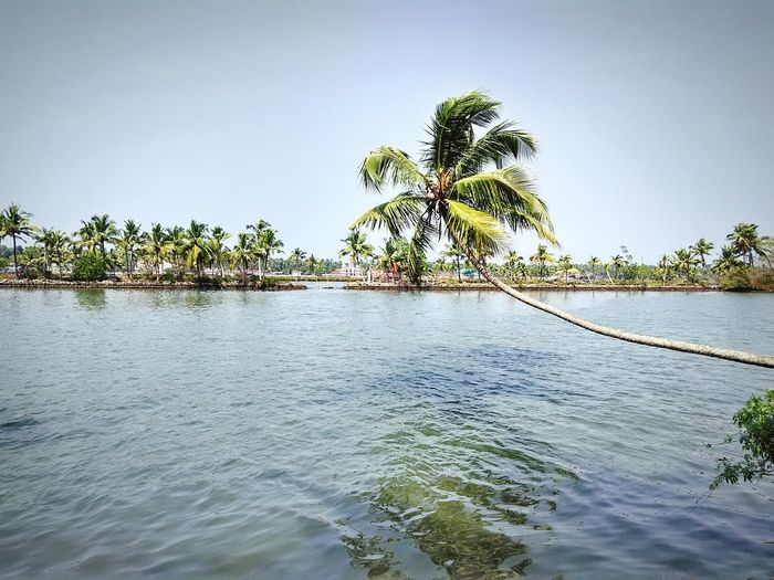 Beautiful view Kerala Backwaters Beauty Nature