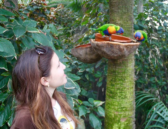 Smiling young woman looking at rainbow lorikeets on bird feeder