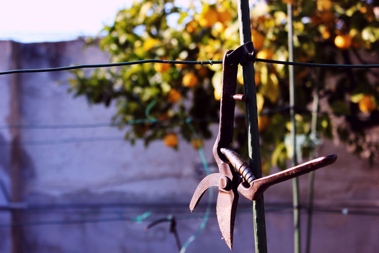 Close-up of equipment hanging on clothesline
