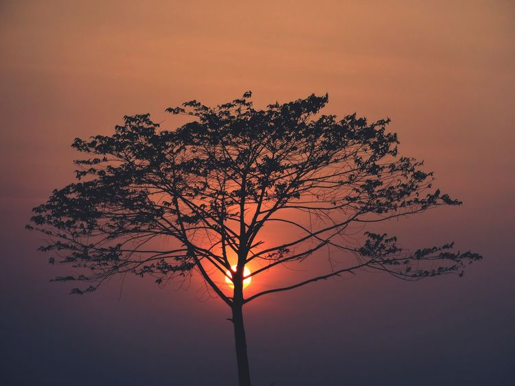EyeEm Selects Sunset Tree Silhouette Nature Tranquility No People Beauty In Nature Outdoors Landscape Sky Tree Trunk Scenics Winter Sunset Lovers Sunset_collection Sunsets Are Paradise Sunsets_captures Tranquil Scene Sunsets_ng Sunsetsaroundtheworld Illuminated Close-up Sunset Silhouettes Sunsetlover