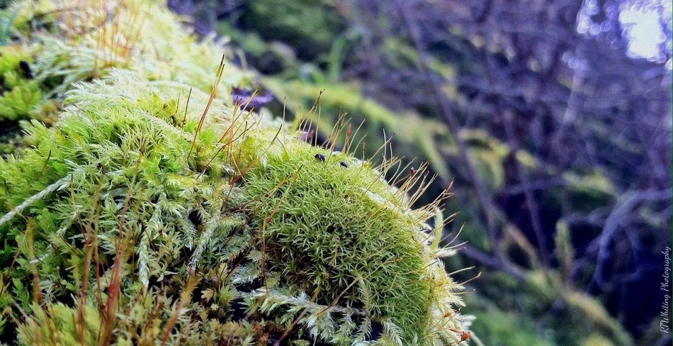 While on one of my hikes by my place I came across a beautiful bed of moss, so much beauty to be found when you stop to look a little closer.. EyeEm Best Shots - HDR EyeEm Best Shots - Macro / Up Close TheMinimals (less Edit Juxt Photography) Nature_collection