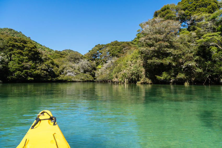 Navigating a mangrove tree lined river in New Zealand. Beauty In Nature Blue Clear Sky Day Green Color Growth Lake Lush Foliage Mountain Nature Non-urban Scene Scenics Sunny Tourism Tourist Tranquil Scene Tranquility Travel Destinations Tree Vacations Water