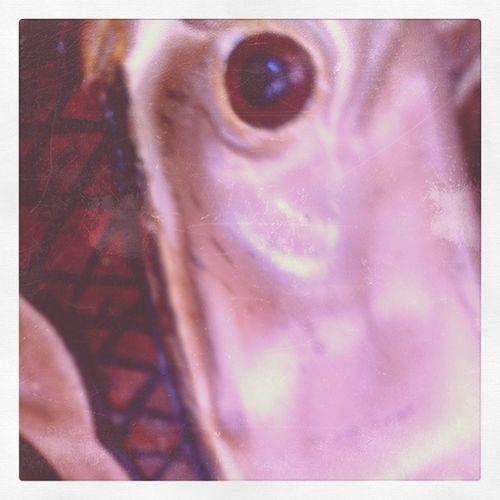 robot pony eye at Griffith Park Merry-Go-Round Robot Pony Eye