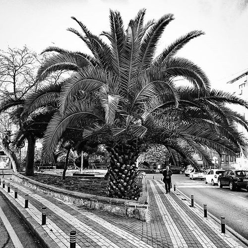 Bnw Bnw_captures Black White Instagram Photo Photooftheday PhotoADay Siyah Siyahbeyaz Selimiye Istanbul Istanbullife Turkey