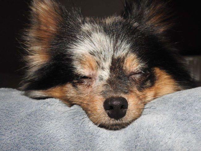Dog Love Dogs Of EyeEm Dog Lover Dog❤ Dog Photography Domestic Animals Animal Photography Animal Family Animal Love Animal