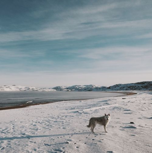 Dog One Animal Nature Sky Snow Arctic Russia