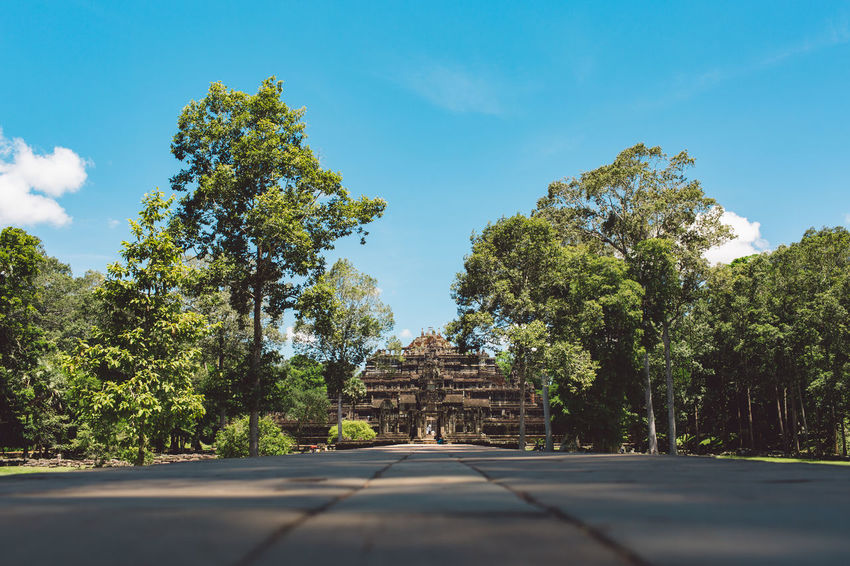 Siem Reap Cambodia Angkor Tree Plant The Way Forward Direction Sky Architecture Nature Built Structure No People History The Past Growth Day Road Green Color Transportation Sunlight Diminishing Perspective Travel Destinations Outdoors Ancient Civilization Place Of Worship
