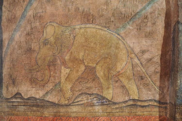 An elephant in