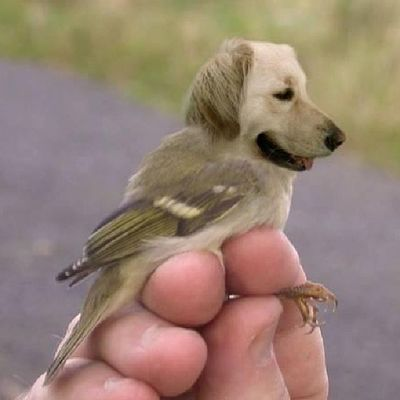 Birddog! Can you imagine being a cat and one of these was flying toward you barking? Bird Dog Instapic Instadaily Instagram Instapet Funny Pets
