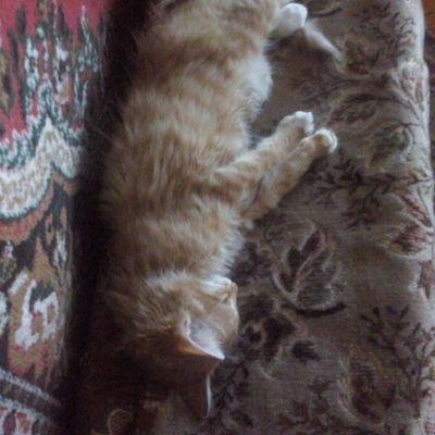 котикинаркотики тимон котята котэ