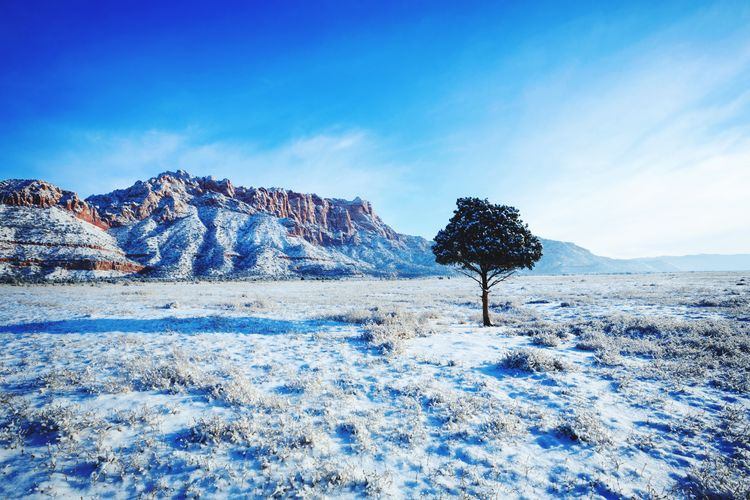 winter morning Canaan Mounain Utah Blue Sky Morning Light Landscape Photography Morning Beautiful Nature Frozen Desert Southern Utah  Snow Mountain Cold Temperature Winter Blue Backgrounds Tree Sky Landscape Pine Tree Idyllic Remote Tranquil Scene Countryside Scenics Calm Tranquility Snowcapped Mountain
