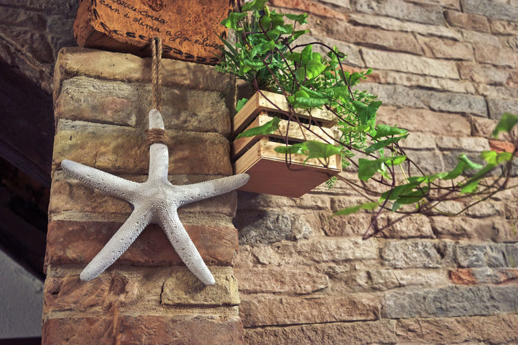 No People Star Shape Wall - Building Feature Wall Close-up Architecture Built Structure Nature Day Shape Stone Wall Plant Decoration Brick Wall Solid Brick Building Exterior Outdoors Old Low Angle View Starfish  Starfish  Starfish
