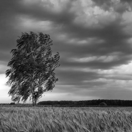 Tree Treeart Drzewo Wiatr Burza Storm Mobilephotography Nature Love Nature_shooters ShotFromTheGalaxy Nature Nature_bw Loves_Poland Blackandwhite Czarno-białe Slaskie Silesia Tychy Bierun Nature Photography Grupamobilni
