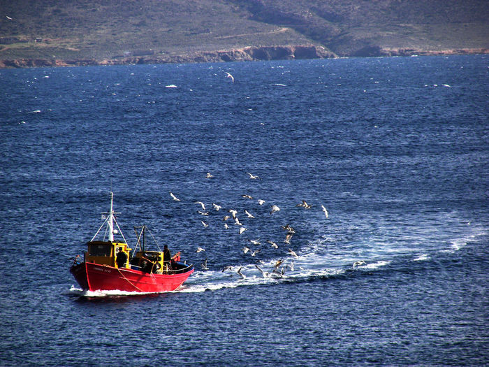 A fishing boat with seagulls. Fishing Boats GREECE ♥♥ Seagulls Beauty In Nature Birds Boat Day Fishing Fishing Boat Greece High Angle View Nature Nautical Vessel Outdoors Sea Sea Life Seagull Seagulls And Sea Water