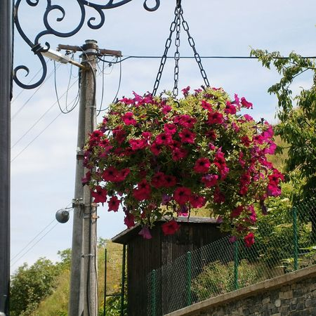 Flowers on the street Plant Sky Nature Flower Flowering Plant No People Growth Outdoors Hanging